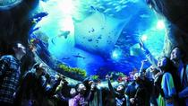 Passer la ligne: Hong Kong Ocean Park Admission, Hong Kong SAR, Attraction Tickets