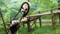 Private Tour: Chengdu Panda Research Center with One-Way Airport Transfer, Chengdu, Nature & ...