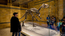 Dinosaur Discovery: The Natural History Museum Family Tour, London, Cultural Tours