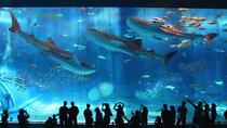 General Admission to Okinawa Churaumi Aquarium, Okinawa, null