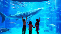General Admission to Osaka Aquarium Kaiyukan