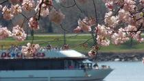 Cherry Blossom and Monuments Cruise in Washington DC, Washington DC, Day Cruises