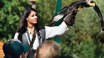 Entrada a Falconeria Locarno, Lugano, Attraction Tickets