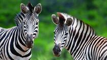 Full Day Guided Safari from Cape Town, Cape Town, Day Trips
