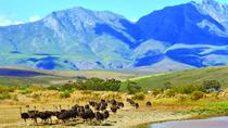 Garden Route 4-Day Guided Tour from Cape Town, Cape Town, Multi-day Tours