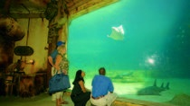 Moses Mabhida Stadium, uShaka Marine Tour and Botanic Gardens Day Tour from Durban, Durban, ...