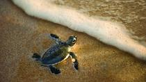 Turtle Spotting Tour in St Lucia in South Africa, KwaZulu-Natal, Day Trips