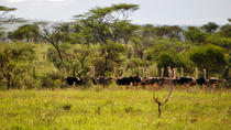 Africas' True Wilderness Safari, Kampala, Private Sightseeing Tours