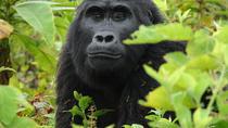 Classic Rwanda and Uganda, Kigali, Private Sightseeing Tours
