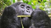 Legends of Uganda Safari, Uganda, Cultural Tours