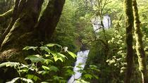 Hiking and Biking: Columbia Gorge Hidden Waterfalls, Portland, Hiking & Camping