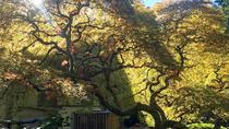 Portland Meditative Garden Tour: Japanese and Chinese Gardens, Portland, Cultural Tours