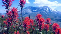 The BEST Mount Saint Helens Tour, Portland, Day Trips
