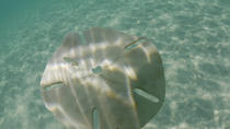 Caicos Cays Cruise, Providenciales, Day Cruises