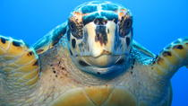 Snorkel Eco Tour, Providenciales, Eco Tours