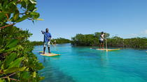 Stand Up Paddleboard Eco tour, Grand Turk