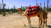 1.5-Hour Small-Group Camel Ride Excursion to Palm Grove from Marrakech, マラケシュ