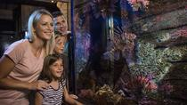 SEA LIFE Sunshine Coast Underwater World Aquarium Entrance Ticket, Noosa & Sunshine Coast, ...