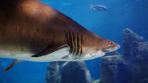 Sunshine Coast Underwater World SEA LIFE Aquarium Entrance Ticket with Shark Dive Xtreme, Noosa...