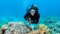 2-Tank Scuba Diving Tour from Providenciales, Providenciales, Sailing Trips