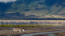 10 Days Northern Tanzania Safari, Arusha, Private Sightseeing Tours