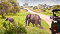 3 Day Fly-in Safari Tour to Ruaha National Park from Dar es Salaam, Dar es Salaam, Multi-day Tours