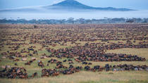 3 Day Fly-in Safari Tour to Serengeti National Park, Arusha, Multi-day Tours