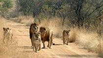 3-Day Safari to Mikumi National Park from Dar-Es-Salaam, Dar es Salaam, Attraction Tickets