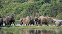3 Day Safari tour to Selous Game Reserve from Dar es salaam, Dar es Salaam, Multi-day Tours