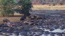 4-Day Katavi National park Guided tour from Arusha, Arusha, Attraction Tickets