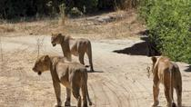 4-Day Ruaha National Park safari tour from Dar-Es-Salaam, Dar es Salaam, Attraction Tickets