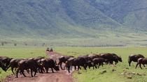 4-Day Safari to Lake Manyara National Park and Ngorongoro Crater from Arusha, Arusha, Multi-day...