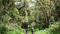 5-Day Ngozi Crater Lake guided hiking tour from Dar-Es-Salaam