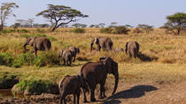 5-Day Safari to Serengeti national park & Ngorongoro Crater from Arusha, Arusha, Multi-day Tours