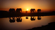 5-Day Safari tour to Serengeti & Lake Manyara national parks from Arusha, Arusha, Multi-day Tours