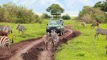 6-Day Safari to Southern Tanzania from Dar-Es-Salaam, Dar es Salaam, Multi-day Tours