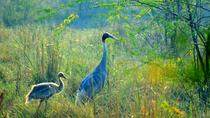 Excursion to Bharatpur Bird Sanctuary from Agra