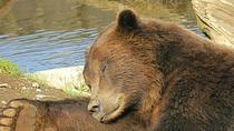 Landausflug in Sitka: Sightseeing mit Fortress of the Bear und Totempfählen, Sitka, ...