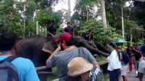 Nursing with Love at Elephant Sanctuary, Kuala Lumpur, Day Trips
