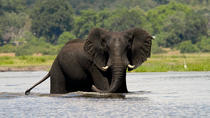 Chobe Full Day Safari Trip, Victoria Falls, Day Trips