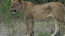 Hwange and Matopo National Park 5 Days Safari Tour, Victoria Falls, Multi-day Tours