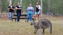 3-Day Great Camping Adventures Kangaroos Abseiling Hiking Aboriginal Experience, Sydney, Hiking & ...