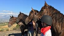 Horse Trail Experience in Paarl, Cape Town, Full-day Tours