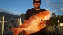 Whitsunday Islands and Great Barrier Reef Fishing Charters, Airlie Beach, Day Trips
