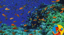 Boat Trip 2 Snorkeling and 1 Diving in Tiran Island Sharm el Sheikh, Sharm el Sheikh, Other Water ...