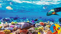 Boat Trip Snorkeling and Diving in Ras Mohamed Sharm el Sheikh, Sharm el Sheikh, Other Water Sports