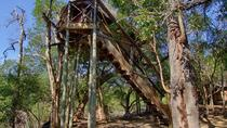 3 Day Lodge and Treehouse Kruger National Park Safari, Kruger National Park, Multi-day Tours