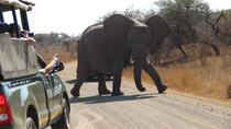 4 Day Classic Kruger National Park Safari, Kruger National Park, Multi-day Tours