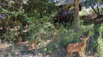 5 giorni Lodge e Treehouse Kruger National Park Safari, Johannesburg, Multi-day Tours