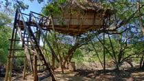6 giorni Lodge e Treehouse Kruger National Park Safari, Kruger National Park, Multi-day Tours